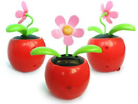 Spy Flower Pot Camera In Karad